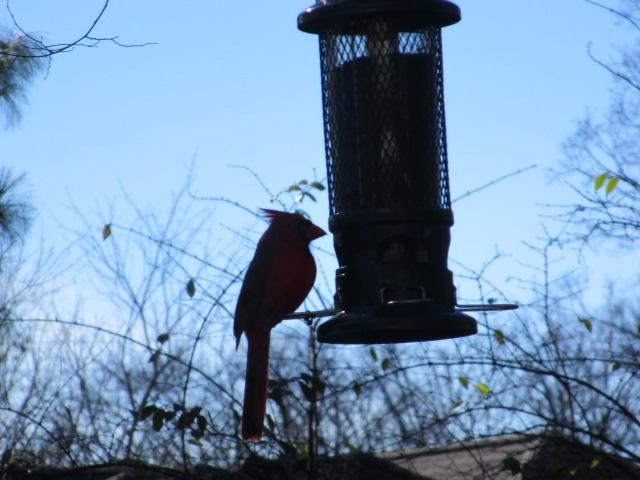 CardinalSilhouette