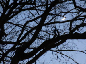 Moon:branches