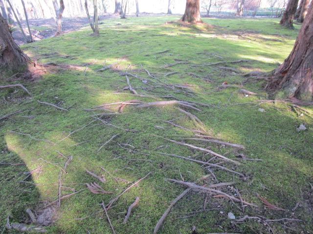 roots:moss